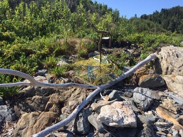 Summer on Seguin 2019 - Friends of Seguin Island Light Station